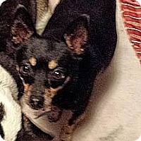 Adopt A Pet :: Poochie and Belle - Sussex, NJ