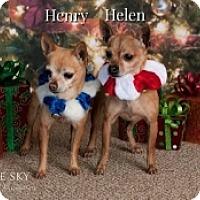 Adopt A Pet :: Henry & Helen - Mesa, AZ