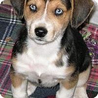 Adopt A Pet :: Skye - Schaumburg, IL