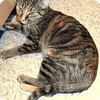 Adopt A Pet :: Josie - Chattanooga, TN
