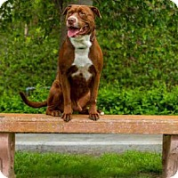 Adopt A Pet :: MAX -#A028594 is in DANGER at San Clemente Shelter - Beverly Hills, CA