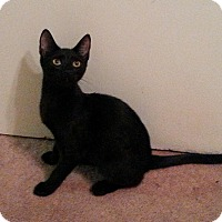 Adopt A Pet :: Ebony - Sherman Oaks, CA
