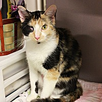 Adopt A Pet :: Susie Q - New Richmond,, WI