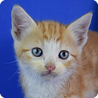 Adopt A Pet :: Ferdinand - Carencro, LA