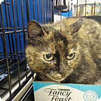 Adopt A Pet :: Brooke - Avon, OH
