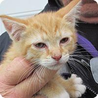 Adopt A Pet :: Peter - Germantown, MD