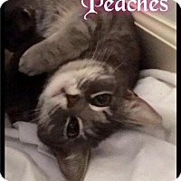 Adopt A Pet :: Peaches - Foster / 2016 - Maumelle, AR