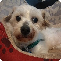Adopt A Pet :: Willow - Alden, NY