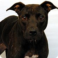 Adopt A Pet :: Geo - Newland, NC