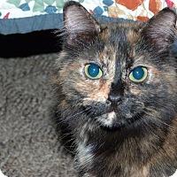 Adopt A Pet :: Anastasia - Stafford, VA