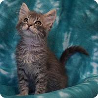 Adopt A Pet :: Goldie - Eureka, CA