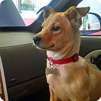 Adopt A Pet :: Owen - Gallatin, TN
