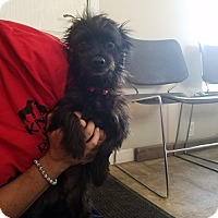Adopt A Pet :: Bob Marley - Lemoore, CA
