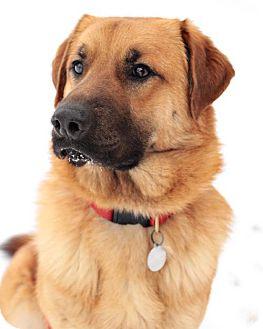 German Shepherd Dog Mix Dog for adoption in Fishers, Indiana - Winston G.B.