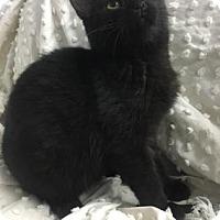Adopt A Pet :: Eugene - Paducah, KY