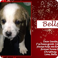 Adopt A Pet :: Bells - Ringwood, NJ