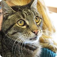 Adopt A Pet :: Toby - Unionville, PA