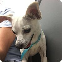 Adopt A Pet :: Gandolph - Washington, DC