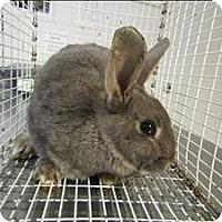 Adopt A Pet :: Thumper - Raleigh, NC