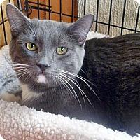 Adopt A Pet :: ShiLynn - Santa Fe, NM