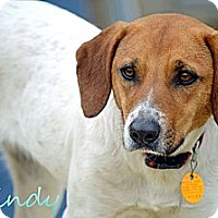 Adopt A Pet :: Mindy - E. Greenwhich, RI