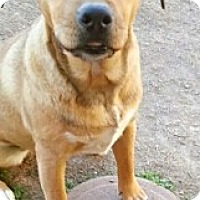 Adopt A Pet :: Millie - Only $45 adoption! - Litchfield Park, AZ