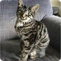 Adopt A Pet :: Roxie - Kirkwood, DE