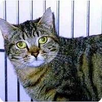 Adopt A Pet :: Blossom - Medway, MA