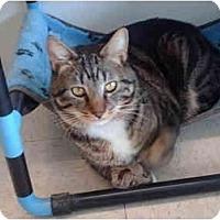 Adopt A Pet :: Mr. Snuggles - El Cajon, CA