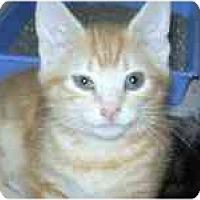 Adopt A Pet :: Denny - Arlington, VA