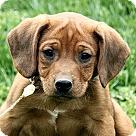 Adopt A Pet :: Elijah