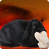 Adopt A Pet :: Vivian - Marietta, GA