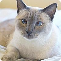 Adopt A Pet :: Grace - Alameda, CA
