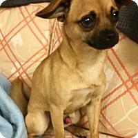 Adopt A Pet :: Pip Sqweak - Phoenix, AZ