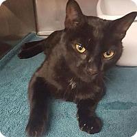 Adopt A Pet :: Adonis - Herndon, VA
