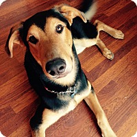 Adopt A Pet :: Moose-PENDING ADOPTION! - Tracy, CA