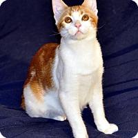 Adopt A Pet :: Shae - Liberty, NC