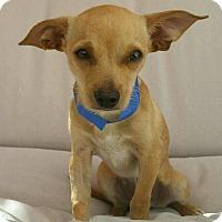 Adopt A Pet :: Kona - Thousand Oaks, CA