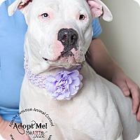 Adopt A Pet :: Opal - Apache Junction, AZ