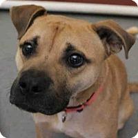Adopt A Pet :: ZIGGS - Pittsburgh, PA