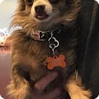 Adopt A Pet :: Oso - Valparaiso, IN