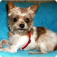Adopt A Pet :: Butch - Mooy, AL