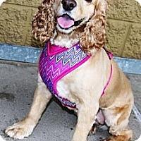Adopt A Pet :: Lyla - Gilbert, AZ
