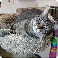 Adopt A Pet :: Isabella - Delmont, PA
