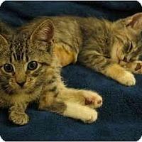 Adopt A Pet :: JMC-05-2-2 - Davis, CA
