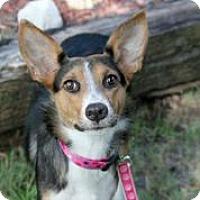 Adopt A Pet :: Mercedes - Austin, TX