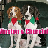 Adopt A Pet :: WINSTON & CHURCHILL - Birmingham, MI