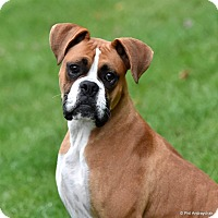 Adopt A Pet :: Buddy - Westminster, MD
