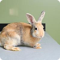 Adopt A Pet :: Blaine - Marietta, GA