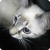 Adopt A Pet :: A367635 - San Antonio, TX